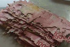 Begini Cara Tukar Uang Rusak Dimakan Rayap ke Bank Indonesia