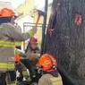Viral Video Pohon Berasap di Kota Bandung, Bagaimana Ceritanya?