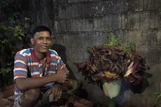 Mengenal Bunga Bangkai yang Tumbuh di Pekarangan Warga Cipete Selatan: Bukan Tanaman Langka