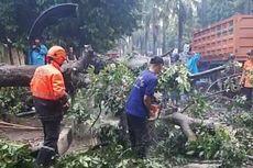 Pengendara Motor Tewas Terlindas Truk Saat Hindari Pohon Tumbang
