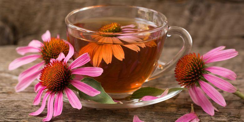 Ilustrasi teh dari bunga echinacea