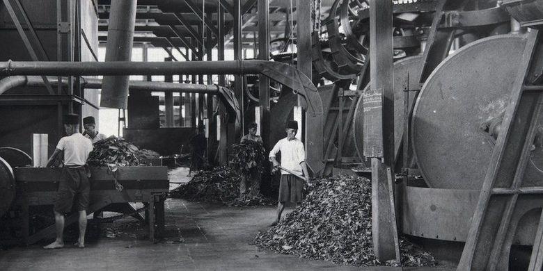 Suasana di dalam pabrik Cipetir sekitar 1925-1937. Berbeda dengan tanaman karet biasa, gutta percha dihasilkan dari getah daun karet oblong.