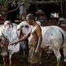 Terapi Kotoran Sapi untuk Cegah Covid-19 di India, Ini Peringatan Para Ahli