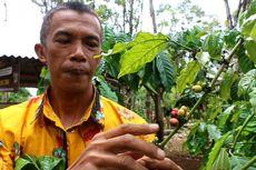 Desa Wisata Cibeureum Diresmikan, Bisa Piknik Sambil Belajar Bikin Kopi