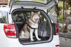 Ini Hukum Membawa Hewan Dalam Kendaraan