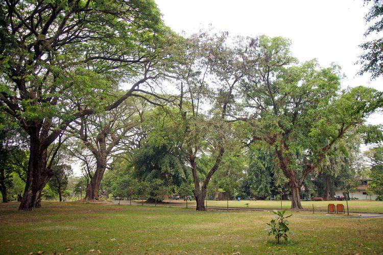 Ilustrasi Taman Balekambang, salah satu tempat wisata di Solo yang bisa dikunjungi secara virtual.