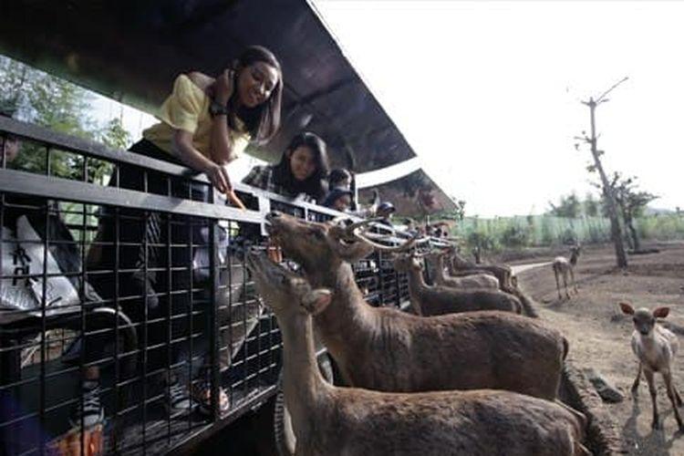 Batu Secret Zoo, Jatim Park 2, Batu, Jawa Timur.