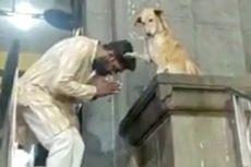 Video Viral, Anjing