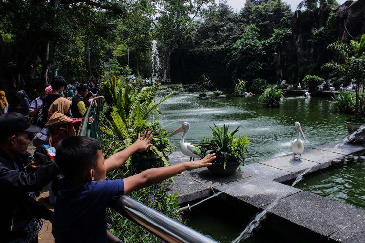Pengunjung mengamati burung Pelikan (Pelecanus conspicillatus) saat berlibur di Taman Margasatwa Ragunan, Jakarta Selatan, Kamis (26/12/2019). Liburan Natal dan Tahun Baru 2019/20 dimanfaatkan sebagaian masyarakat untuk berkunjung ke sejumlah tempat wisata.