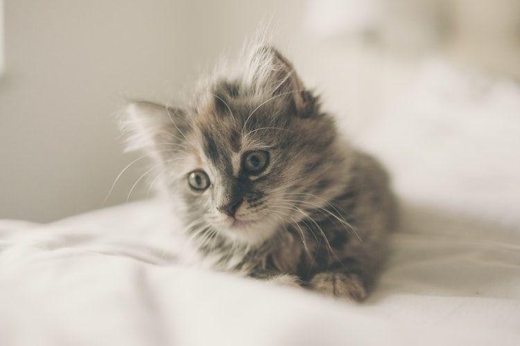 Ilustrasi kucing sakit