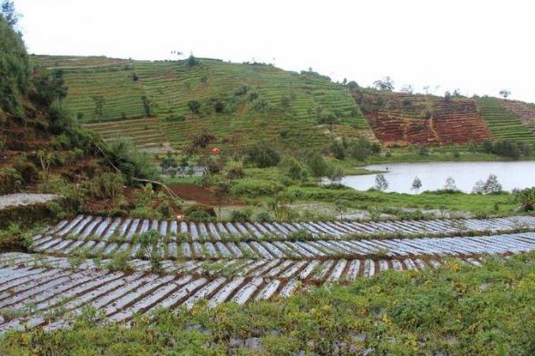 Lindungi Lahan Pertanian, Bupati Situbondo Gencarkan Program KOBESSA