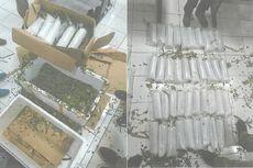 Penyelundupan 80.000 Benih Lobster Senilai Rp 8 Miliar Digagalkan di Bandara Juanda