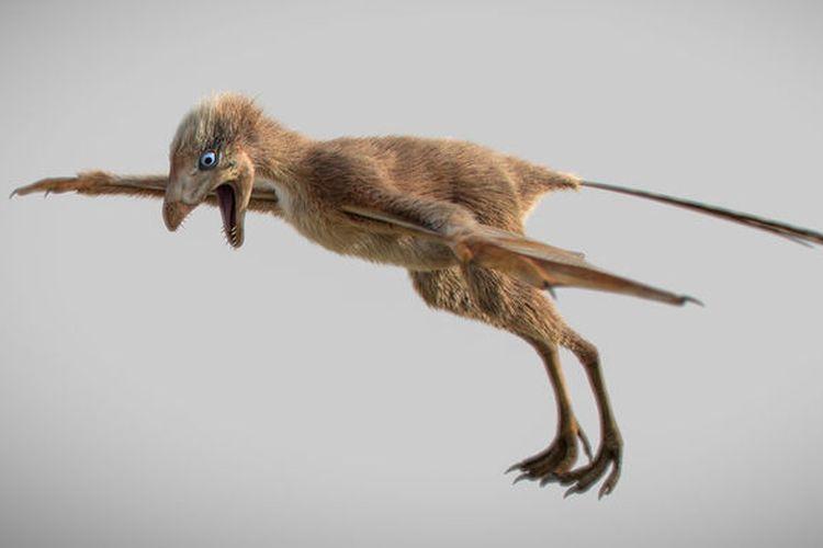 Ambopteryx longibrachium, dinosaurus berbulu bersayap kelelawar yang baru saja ditemukan di China