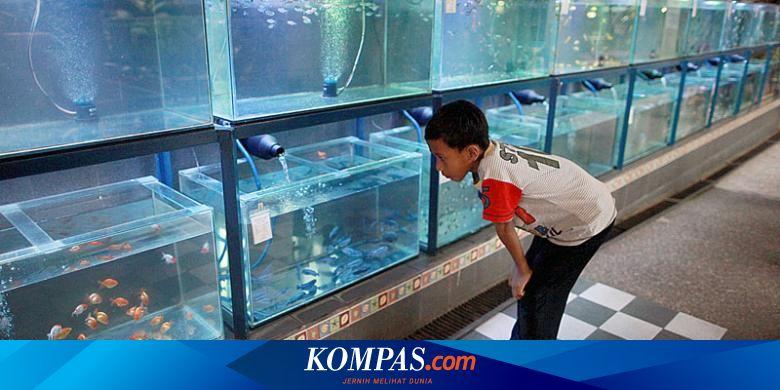 Jangan Anggap Remeh Ikan Juga Bisa Mengalami Depresi Seperti Manusia Halaman All Kompas Com