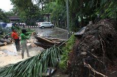 Soal Pohon Tumbang, Jakarta Selatan Mengaku Kekurangan Alat Pemangkas Pohon