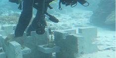 Lindungi Bambu Laut dengan Teknologi Wahana Restorasi, Peneliti Kementerian KP Ini Raih Satyalancana