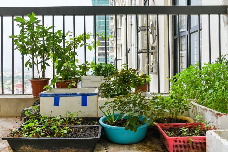 Ilustrasi menanam sayuran di balkon.