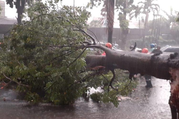 Pohon tumbang menghalangi jalan umum di di Jalan Raya Abdullah bin Nuh, Kecamatan Bogor Barat, Senin (11/11/2019).