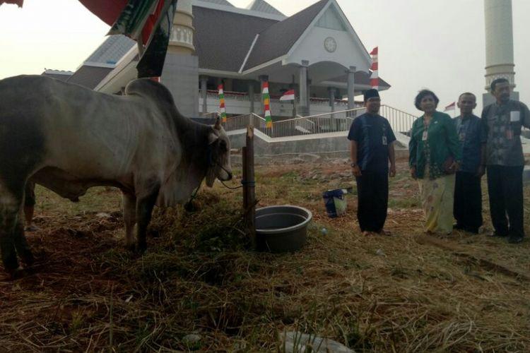 Kasudin Ketahanan Pangan, Kelautan dan Pertanian(KPKP) Jakarta Barat, Marsawitri Gumay (kedua dari kiri) saat meninjau sapi kurban Presiden Jokowi di Masjid Raya KH Hasyim Asyari, Kamis (31/8/2017).