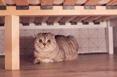 Kenapa Kucing Bersembunyi di Bawah Tempat Tidur?