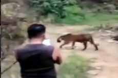 Demi Foto dan Video, Sekelompok Warga Pertaruhkan Nyawa Dekati Harimau yang Baru Keluar dari Hutan