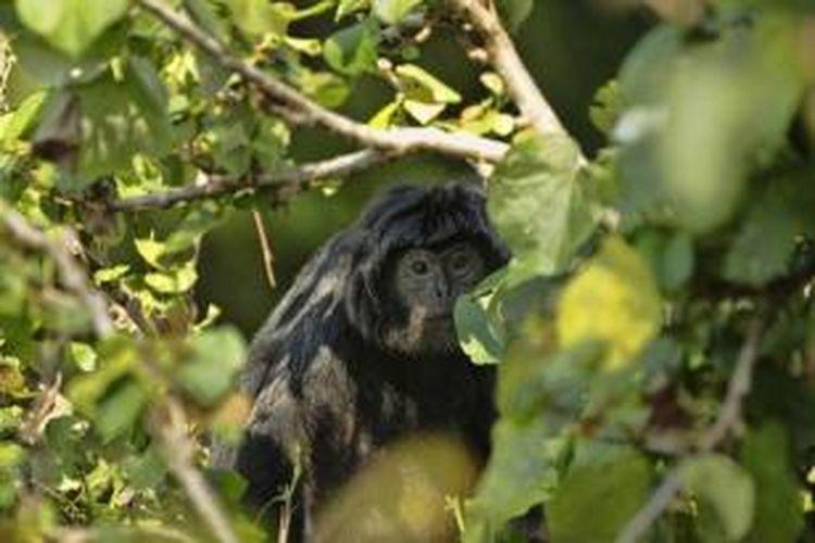25+ Hewan endemik jawa terbaru