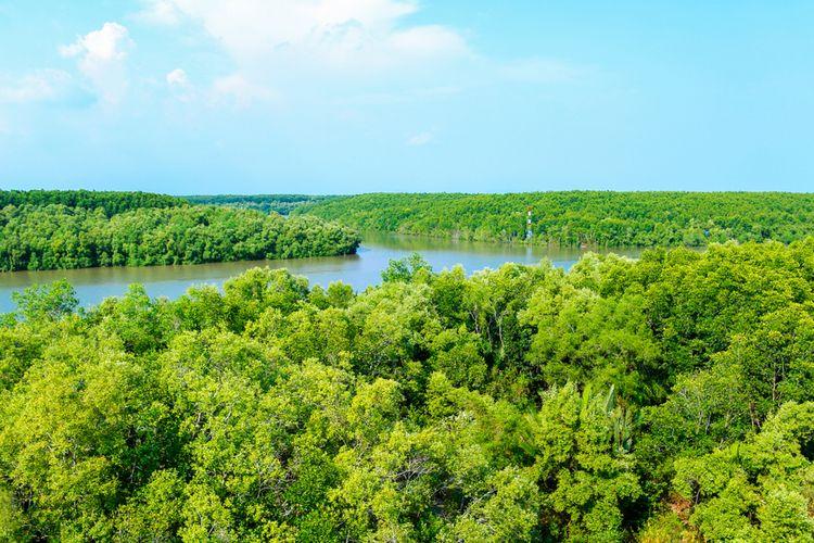 Ilustrasi hutan mangrove