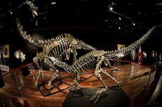 Karnivora Ganas ini, Spesies Dinosaurus Baru dari Zaman Jurassic