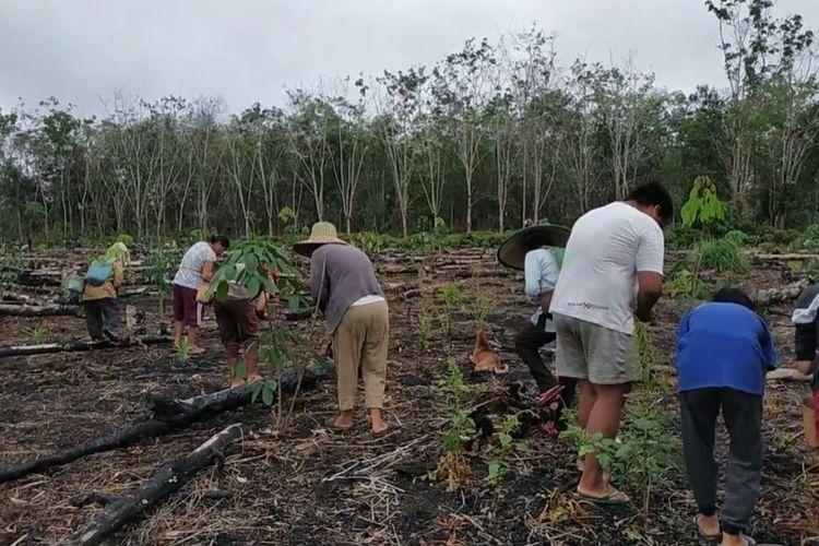 Warga di Kampung Ongko Asa, Kutai Barat, Kaltim, saat masa tanam padi di ladang milik Isminah, September 2020.