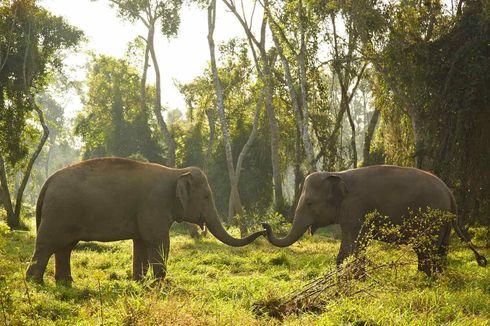 Hotel di Thailand ini Tawarkan Field Trip Virtual Gratis untuk Lihat Gajah