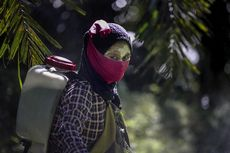 Investigasi Media AS di Perkebunan Sawit Indonesia-Malaysia: Pemerkosaan dan Pelecehan Lain Marak Menimpa Pekerja Wanita