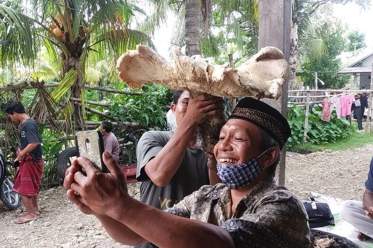 penampakan jamur raksasa di Lombok Tengah