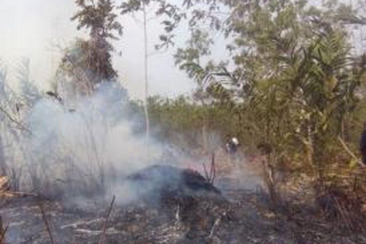 Kebakaran hutan seluas 40 hektar di Kecamatan Samboja, Kabupaten Kutai Kartanegara, Kalimantan Timur, berada di area konservasi orangutan yang dikelola Borneo Orangutan Survival (BOS) Samboja.