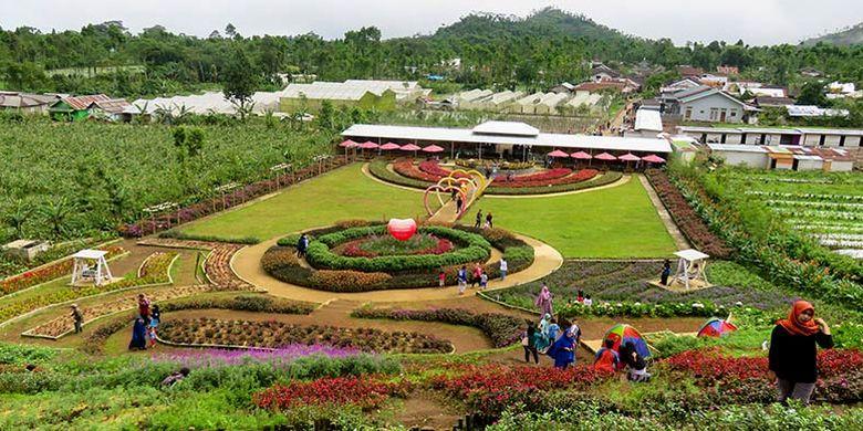 Keindahan Taman Bunga Kutabawa dengan warna-warni kembangnya.