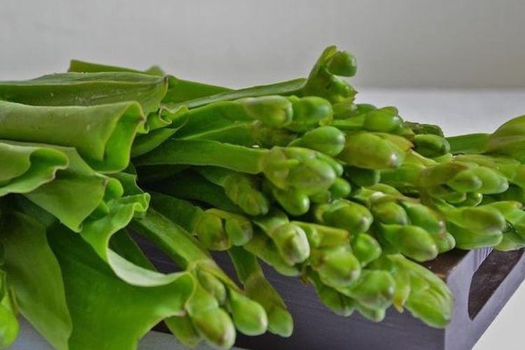 Daun genjer segar yang merupakan sayuran hijau