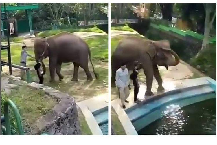 Viral, video gajah Lia yang dipukul kepalanya oleh salah satu pelatih gajah di Taman Marga Satwa Budaya Kinantan Bukittinggi.