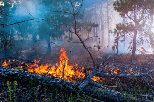 KLHK: 135.747 Hektar Lahan Terbakar Sepanjang Januari-Juli 2019