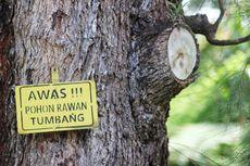 Rawan Pohon Tumbang, Jika Ada Hujan Lebat dan Angin Kencang Mobil Sebaiknya Menepi