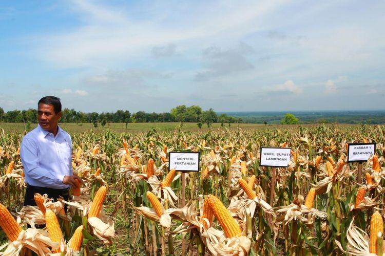 Menteri Pertanian (Mentan) Andi Amran Sulaiman saat mengunjungi salah satu perkebunan jagung