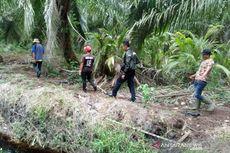 Muncul Jejak Kaki Diduga Milik Hewan Buas, Ini Penjelasan BBKSDA Riau
