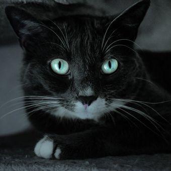 Ilustrasi kucing, mata kucing.