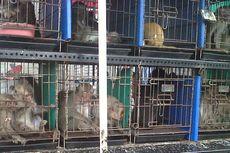 Tolong Satwa Liar yang Diperjualbelikan Juga, Pak Jokowi...