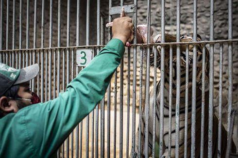 Saat New Normal, Orang Sakit Dilarang Kunjungi Taman Margasatwa Ragunan