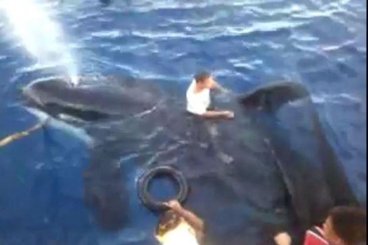 Paus pembunuh (Orca) yang tersangkut jaring dibebaskan para nelayan. Mereka menghormati satwa ini sesuai kepercayaan yang dianut agar keluarga mereka selamat