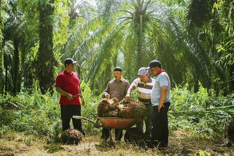 Petani Sawit Swadaya Sinar Mas Agribusiness and Food (Foto diambil sebelum pandemic Covid-19)