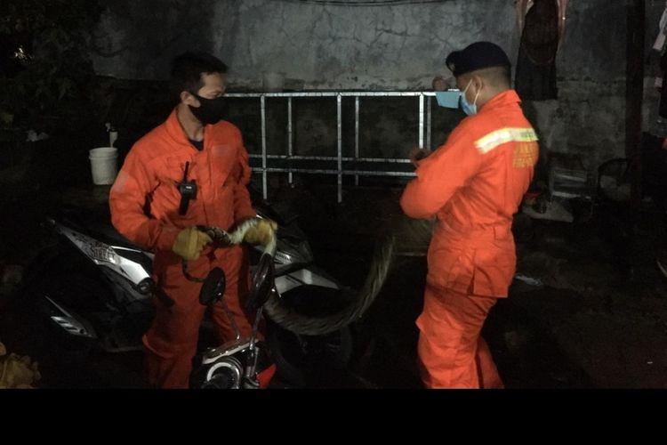 Petugas suku dinas penanggulangan kebakaran dan penyelamatan Jakarta Barat (Gulkarmat) mengevakuasi seekor ular sanca sepanjang 2,5 meter yang masuk ke rumah warga di kawasan Kebon Jeruk pada Rabu (6/1/2021) pagi