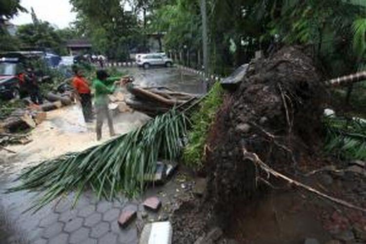 Petugas dari Dinas Pertamanan DKI Jakarta memotong pohon yang tumbang di halaman Kantor Kecamatan Setiabudi, Jakarta Pusat, Jumat (28/11/2014). Hujan deras disertai angin kencang juga mengakibatkan jalanan di Setiabudi Barat terendam banjir. KOMPAS/LUCKY PRANSISKA