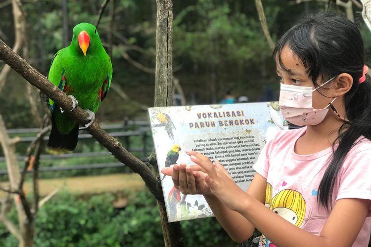 Seorang pengunjung tengah memberi makan burung di Bandung Zoological Garden (Bazoga/Bandung Zoo), beberapa waktu lalu.