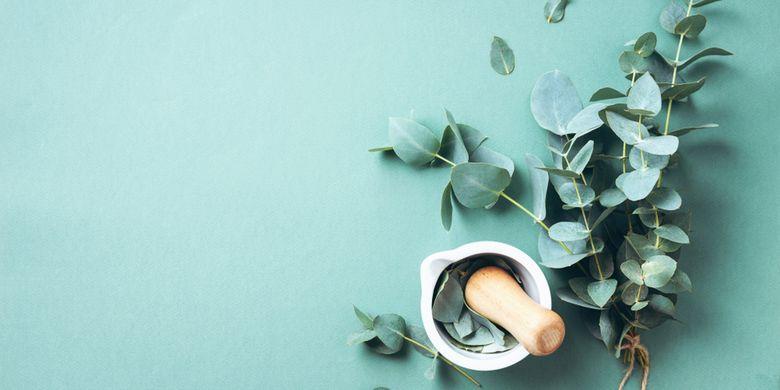 Ilustrasi eucalyptus