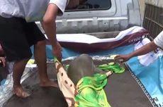 Dirawat Sepekan, Bayi Dugong Penuh Luka yang Terdampar di Polewali Mandar Akhirnya Mati